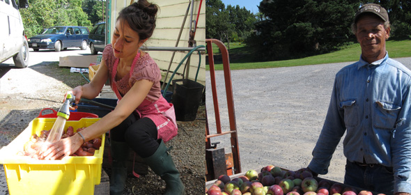 Noelle Marzullo, dedicated 8-year employee at MP market, washing potatoes. Linford Robinson, who has been working at Montgomery Place Orchard for 12 years, arrives with the morning's harvest. / LISA MISKELLY