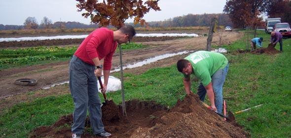 Volunteers planting oak trees on Rockefeller Lane