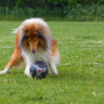 DogPark6-19