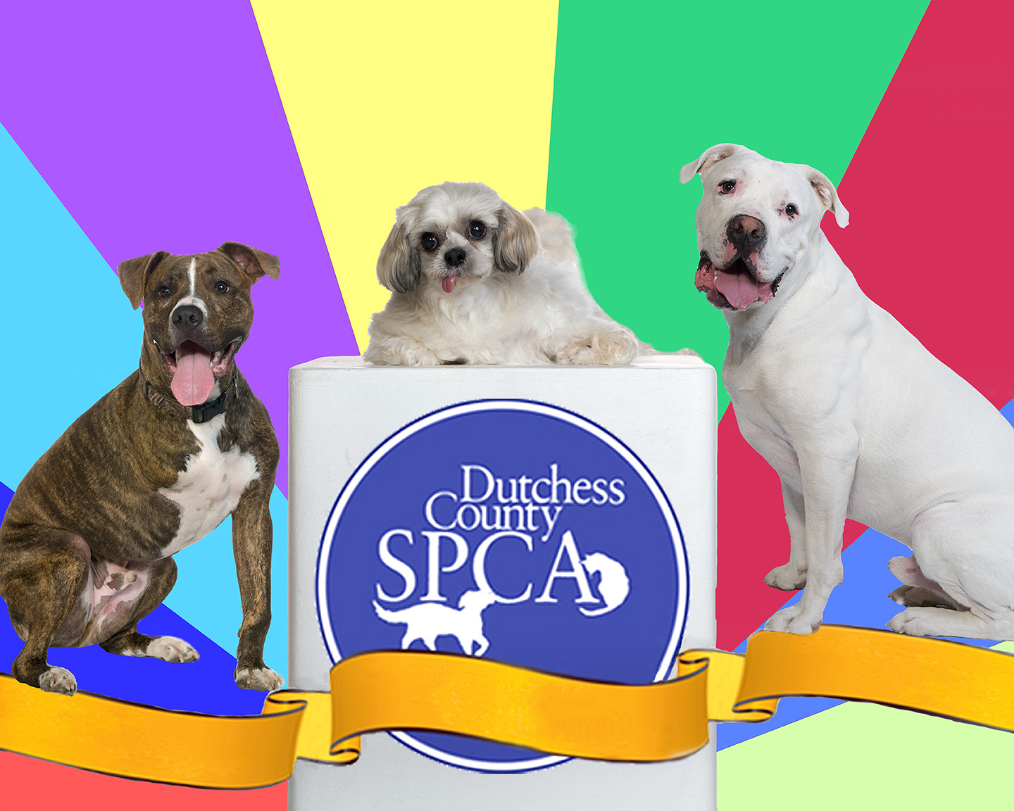From left: Dodger, Jade and Thor are the 2013 Dutchess County SPCA Paws in the Park Petwalk Mascots. This trio of Super Alumni Friends overcame disabilities and now lead full lives with their adoptive families. Image donated by On Location Studios in Poughkeepsie.