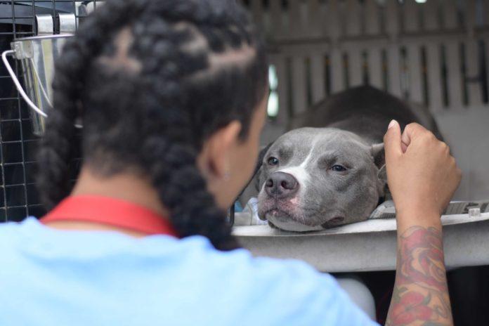 Girl petting dog - DCSPCA